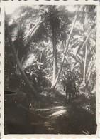 Vietnam : THAN-TRIEU : Soldats Sur Une Piste Dans La Jungle : 1947 : ( 6cm X 4,3cm ) Photo Militaire - - War, Military