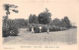¤¤   -  REPUBLIQUE CENTRAFRICAINE   -  Haie D'Aloès   -  Aloës Stauden In Nola    -  ¤¤ - Centrafricaine (République)