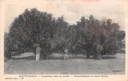 REPUBLIQUE CENTRAFRICAINE - HAUTE-SANGA  - Caoutchoucs Dans Un Jardin  - Kautschukbäume In Einem Garten - Centraal-Afrikaanse Republiek