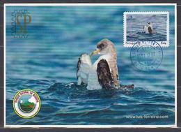 Portugal 2011 Postal Máximo Cagarra Ilhas Selvagens Funchal Madeira Pássaro Bird Maxicard Maximum Calonectris Diomedea - Möwen