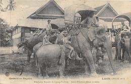 ¤¤  -  LAOS   -  Eléphants Royaux De LUANG-PRABANG  -  Jeune Eléphant Têtant Sa Mère   -   ¤¤ - Laos