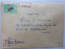 10 BEE STAMP SCOLIA MACULTATA DRURY SECTION OF ARCHITECTURE AND SYSTEMATIZATION ROMANIA 1966 - 1948-.... Républiques