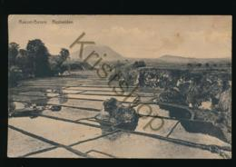 Rakoet-Bessie - Rijstvelden - Rystvelden [AA37 3.098 - Indonesien