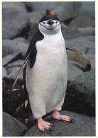 Lote PEP1263, Chile, Postal, Postcard, Pinguino Antartico, Penguin, Wildlife, Antartic - Chile