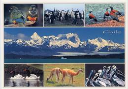 Lote PEP1264, Chile, Postal, Postcard, Loros Tricahue, Penguin, Wildlife, Bird, Mountain - Chile