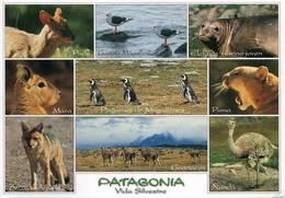 Lote PEP1265, Chile, Postal, Postcard, Fauna De Chile, Patagonia, Penguin, Wildlife, Bird - Chile