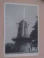 Windmolen St. Pauwels ( Blanco Achterkant / Alléén Benaming ) Roomanmolen / Anno 19?? ( Zie / Voir / See Photo ) ! - Sint-Gillis-Waas