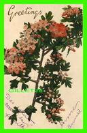 FLOWERS, FLEURS - BRANCHE DE FLEURS - GREETINGS - CIRCULÉE EN 1906 - VALENTINE'S SERIES - - Fleurs