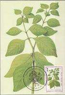 S. Tomé E Principe 1983 Sc. 721 Medicinal Plants Maximum Card Achyranthes Aspera Piante Medicinali Maxi - Sao Tomé E Principe