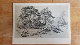 "OLD Soviet POSTCARD   - Shishkin"" Pines""  - 1960s Landscape - Paintings"