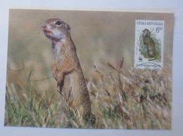 Tiere WWF Prag  Europäischer Ziesel  Maximumkarte   1996 ♥ (57860) - W.W.F.