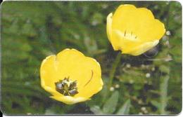 -CARTE-PUCE-ROUMANIE-50000 Lei-2001-FLEURS/ARUM--TULIPES-TBE - Fleurs
