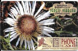 -CARTE-PUCE-HONGRIE-50Egy-1995-MARGUERITE BLANCHE-TBE - Fleurs
