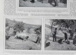 BOIS LE ROI Maison D'artiste Cochon Culture De La Truffe Recolte Des Truffes Mr Martin APT Vaucluse Tartufo Champignon - Livres, BD, Revues