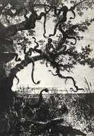 """JULES VERNE """"L'arbre Aux Serpents"""" Cinq Semaines En Ballon 1863 Dessinateur RIOU  Graveur PANNEMAKER  RV - Peintures & Tableaux"""
