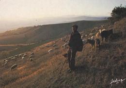 AGRICULTURE--Elevage De Moutons--transhumance--( Berger )--voir 2 Scans - Elevage