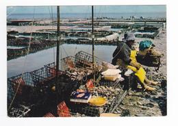 35 Cancale N°8275 Les Parcs à Huîtres Vente Directe Aux Consommateurs Vendeuse Assise En 1972 - Cancale