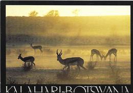 Kalahari - Botswana - Botswana