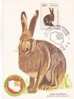 1954754Polska, Zajac Szarak – Leous Europaeus. 1988 (see Corners) (Maximum Card.) - Maximumkarten