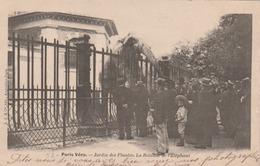 PARIS VECU : Jardin Des Plantes - La Rotonde De L'éléphant. - Frankreich