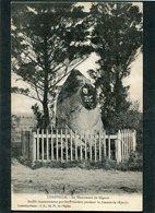 CPA - LUNEVILLE - Le Monument De Gigaut Fusillé Innocemment Par Les Prussiens Pendant La Guerre De 1870 - Luneville