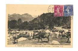 Massif Du Carlitte - Route Des Bouillouses - Paturage - 226 - Autres Communes