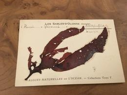 282/ LES SABLES D OLONNE ALGUES NATURELLES DE L OCEAN COLLECTION YDIER F - Sables D'Olonne