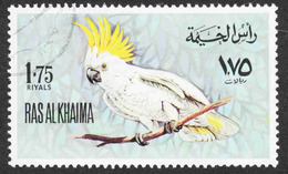 Ras Al Khaima - Birds Used (1) - Parrots