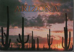 Carte Postale Arizona Desert De L'arizona..C01 - Etats-Unis