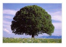 AK Baum Auf Feld - Ungelaufen - Künstlerkarten
