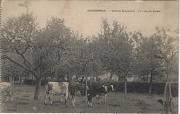 Liedekerke   -   Institut St-Gabriel.   -   Un Coin Du Verger.  -   1921   Naar  Opwijck - Liedekerke