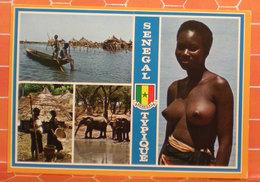 Senegal Typique Vedute Nudo Donna Elefante  CARTOLINA 1978 - Senegal
