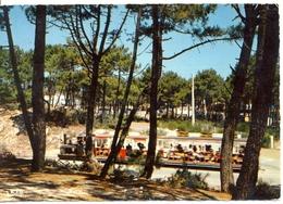 France - Gironde - Bassin D'Arcachon - Cap Ferret - Le Petit Train - Théojac Nº 183 - Dentelée, écrite, Timbrée - 6268 - Arcachon