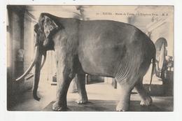 TOURS - MUSEE DE TOURS - L'ELEPHANT FRITZ - 37 - Tours