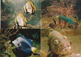 4 CPM POISSONS MUSEE OCEANOGRAPHIQUE DE MONACO - Poissons Et Crustacés