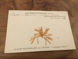 282/ Les Sables D Olonne Algues Naturelles De L Ocean Collections Ydier F - Sables D'Olonne