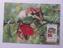 Tiere WWF Tschechien Gartenschläfer  Maximumkarte   1996 ♥ (57862) - W.W.F.
