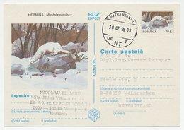 Postal Stationery Rumania 1998 Stoat - Ermine - Ohne Zuordnung