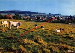 Panorama - Torgny - Rouvroy - Rouvroy