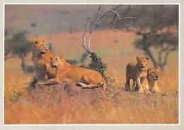 PIE-JmT-19-1639 : LION. LIONNE. - Lions