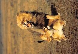 PIE-JmT-19-1640 : LION. LIONNE. - Lions