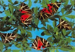 PIE-JmT-19-1644 : PAPILLONS  A RHODES. FARFALLE - Papillons