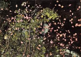 PIE-JmT-19-1645 : PAPILLONS  A RHODES. FARFALLE - Papillons