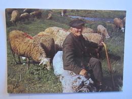 Vacances Dans Les Pyrénées Vieux Berger Mouton - Agriculture