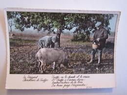 Agriculture Chercheur De Truffes En Périgord - Agriculture