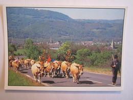 Agriculture La Transhumance Vache - Elevage