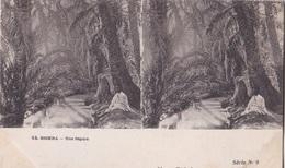 BISKRA UNE SEGUIA VUES STEREOSCOPIQUESS JULIEN DAMOY SERIE N. 9 AUTENTICA 100% - Cartoline Stereoscopiche