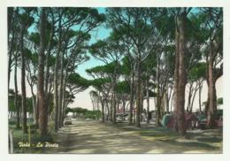 VADA - LA PINETA   VIAGGIATA FG - Livorno