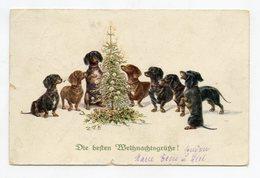 Chien, Chiens TECKEL . NOËL . Christmas . Dog DACHSHUND . Hund DACKEL . Frohe Weihnachten - Chiens