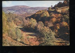 CPM Royaume Uni LLANGENNY Near Crickhowell This Fine Display Of Beech And Bracken - Breconshire
